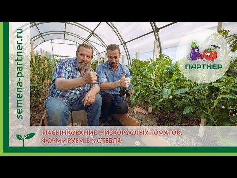 Пасынкование низкорослых томатов. Формировка в 3 стебля.
