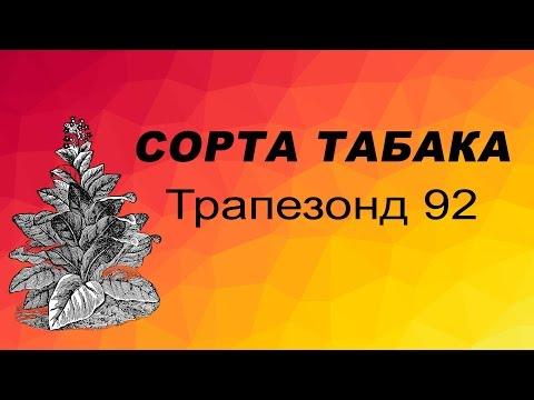 СОРТ ТАБАКА Трапезонд 92. Семена табака.