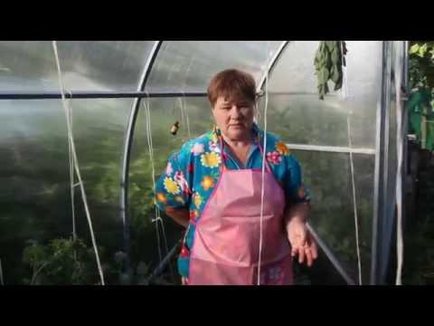 Подкормка растений. Чем подкормить помидоры, огурцы, цветы.