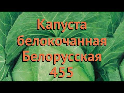 Капуста белокочанная Белорусская 455 🌿 обзор: как сажать, семена капусты Белорусская 455