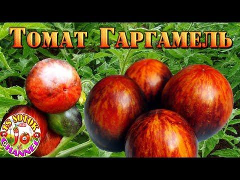 Томат - Gargamel (Гаргамель)