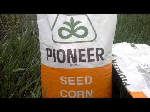 Кукуруза Pioneer P9911