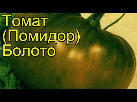 Томат обыкновенный Болото. Краткий обзор, описание характеристик, где купить саженцы, семена