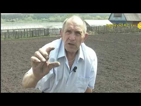 Посадка картофеля наглядно