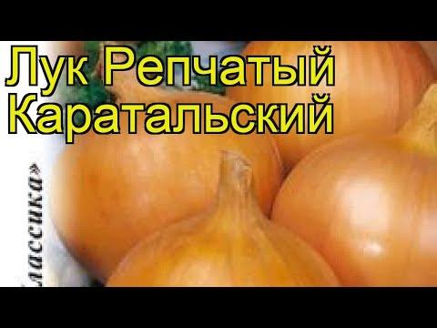 Лук репчатый Каратальский. Краткий обзор, описание характеристик, где купить семена állium