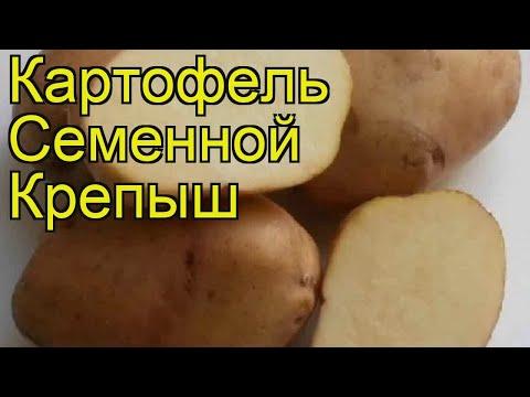 Картофель семенной Крепыш (Крепыш). Краткий обзор, описание характеристик, где купить картофель