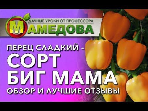 ПЕРЕЦ СЛАДКИЙ - Сорт Биг Мама. Обзор и лучшие отзывы.
