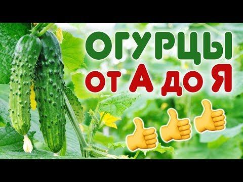 Выращивание огурцов в открытом грунте. Все секреты в одном видео!