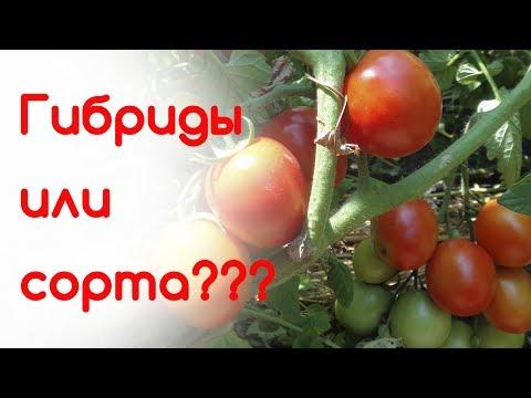 Гибриды или сорта??? Самые ранние томаты!