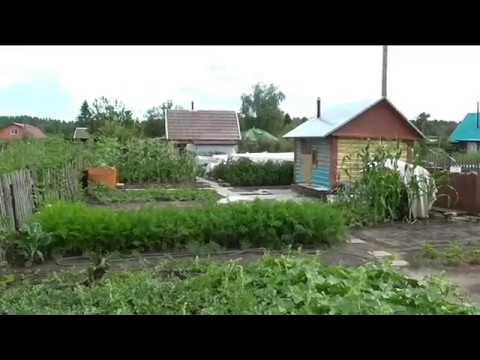 Маленькие хитрости при выращивании арбузов в открытом грунте