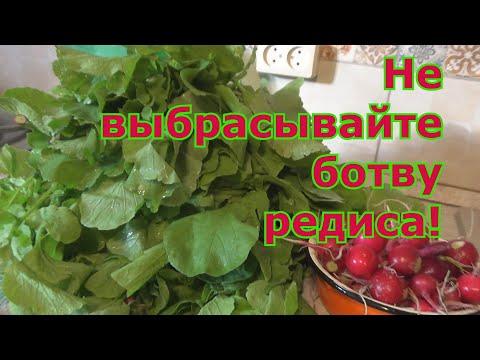 Как использовать листья редиса! Несколько рецептов приготовления блюд из свежей зелени редиса.