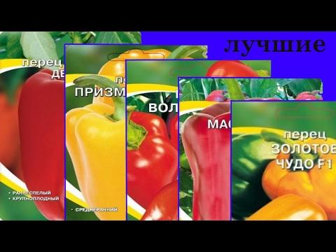 Обзор сортов крупноплодных перцев. Лучшие сорта толстостенных перцев 2017.