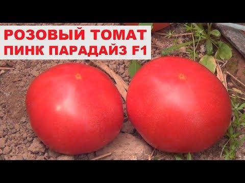 Урожайный розовый томат Пинк Парадайз F1 - Розовый гибрид помидора