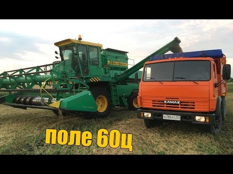 Уборка пшеницы 60ц, не успеваем за одним комбайном