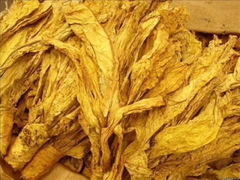 описание сортов табака для трубки и сигарет
