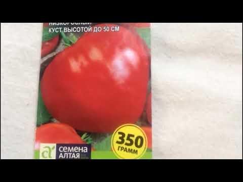 Томат для холодных регионов Сибири, и не только!! Салатный томат - Данко...