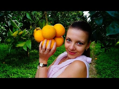 Как выращивают органические апельсины? Экоблог Анны Тятте.