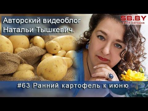 Ранний картофель к июню