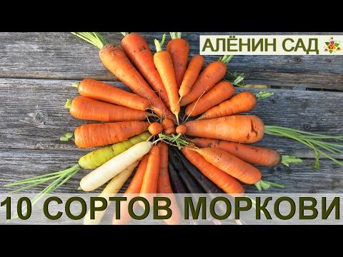 10 СОРТОВ МОРКОВИ выбираю лучшие! Как я выращиваю морковь от посева до сбора урожая