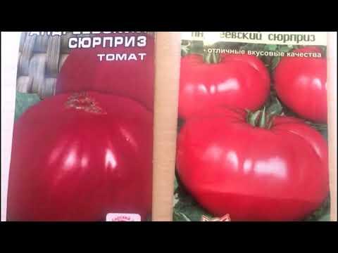 Один из лучших сортов томата - Андреевский сюрприз.. Почему он популярен среди огородников??