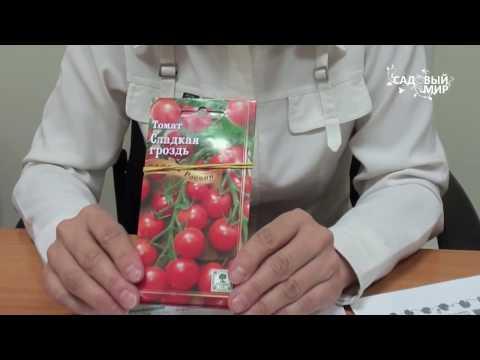 """Томаты, устойчивые к фитофторозу Выбираем сорта. Сайт """"Садовый мир"""""""