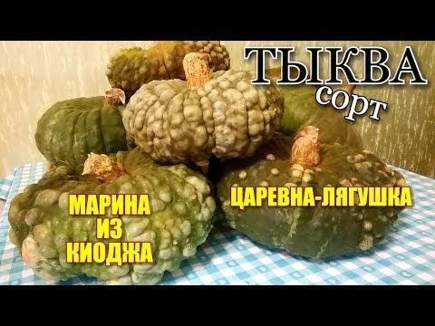 """ОБЗОР-ОТЗЫВ/ Сорт тыквы """"МАРИНА ИЗ КИОДЖА"""" и """"ЦАРЕВНА-ЛЯГУШКА""""/ Какой сорт выбрать!?#pumpkins"""