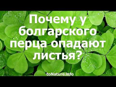 Почему у болгарского перца опадают листья?