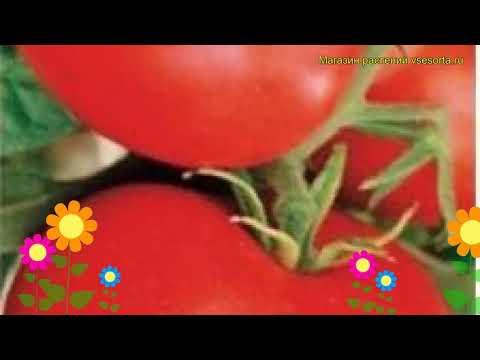Томат обыкновенный Надежда. Краткий обзор, описание характеристик, где купить семена