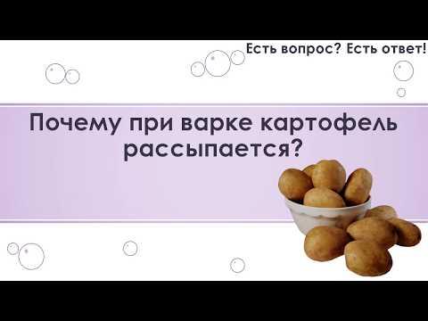 Почему при варке картофель рассыпается? [270]