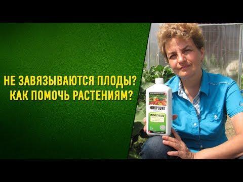 Почему опадают завязи огурцов и других овощей. Что делать?