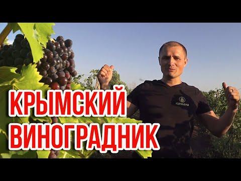 Как делают крымское вино?   Виноградники в Крыму. Полная экскурсия