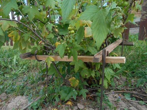 Вечные подпорки из прутка брусков для кустарников кустов смородины крыжовника жимолости.