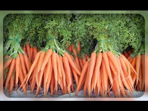 Сорта моркови на любой вкус