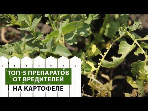ТОП-5 препаратов от вредителей на картофеле