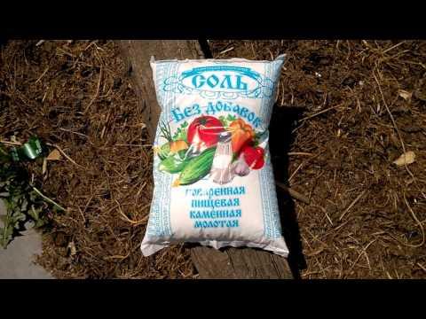 обработка лука соленой водой от червей