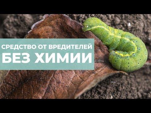 Народное средство от вредителей. Уничтожает гусениц, тлю и паутинного клеща