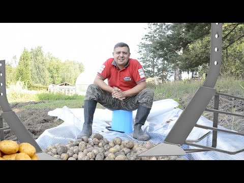 Копаем картошку мотоблоком. Настройка картофелекопателя секреты!