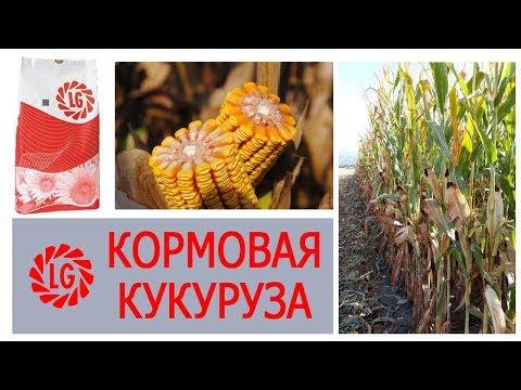 Кормовая кукуруза LIMAGRAIN