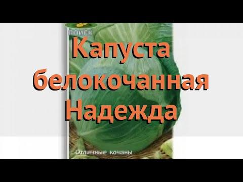 Капуста белокочанная Надежда (nadezhda nadezhda) 🌿 Надежда обзор: как сажать, семена капусты Надежда