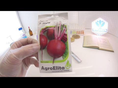 Свекла столовая Экшен F1. AgroElita