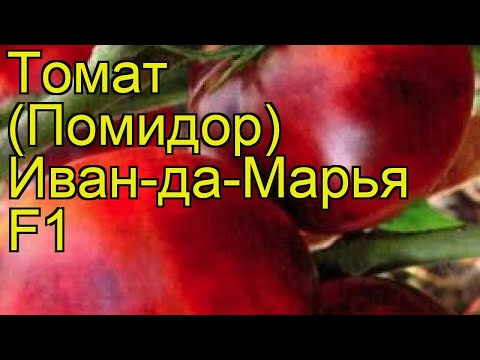 Томат обыкновенный Иван-да-Марья. Краткий обзор, описание характеристик, где купить семена