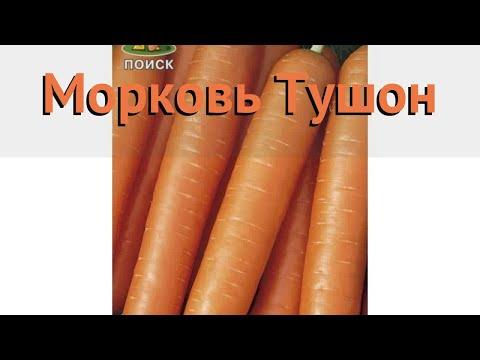 Морковь обыкновенный Тушон (тушон) 🌿 морковь Тушон обзор: как сажать семена моркови Тушон