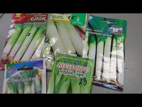 Скоро сеять лук порей,какой выбрать?