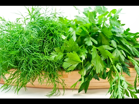 Укроп и Петрушка - огородные витамины и лекарства