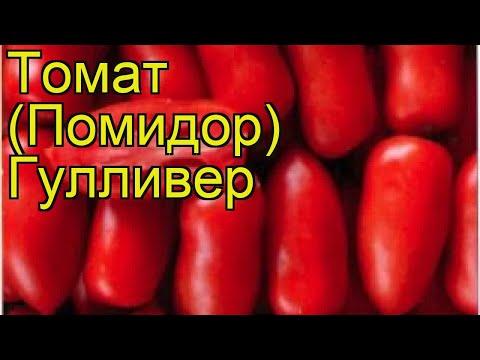 Томат обыкновенный Гулливер. Краткий обзор, описание характеристик, где купить семена