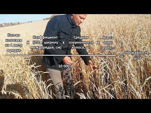 Определение (расчет) биологической урожайности в поле