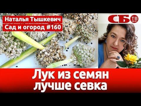 Как правильно вырастить лук из семян