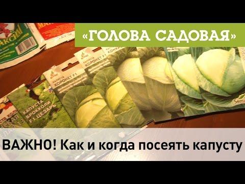 Голова садовая - ВАЖНО! Как и когда посеять капусту