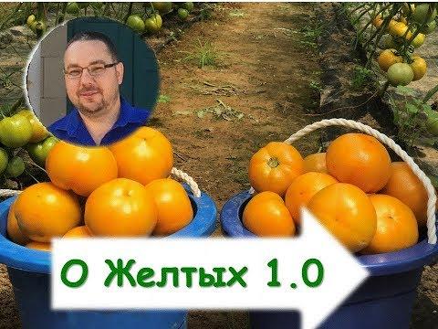 Желтые томаты. Кое-что о выращивании и конкретно о гибриде.