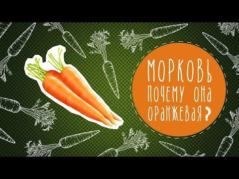 Морковь: почему она оранжевая?